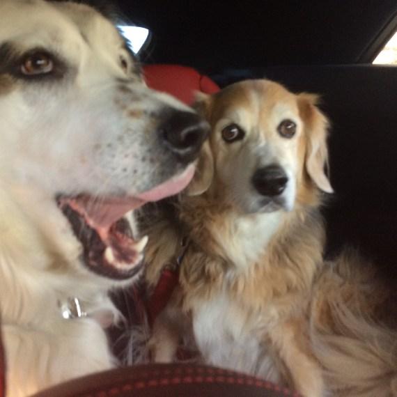 """We're on the way to Cucina Tagliani"""