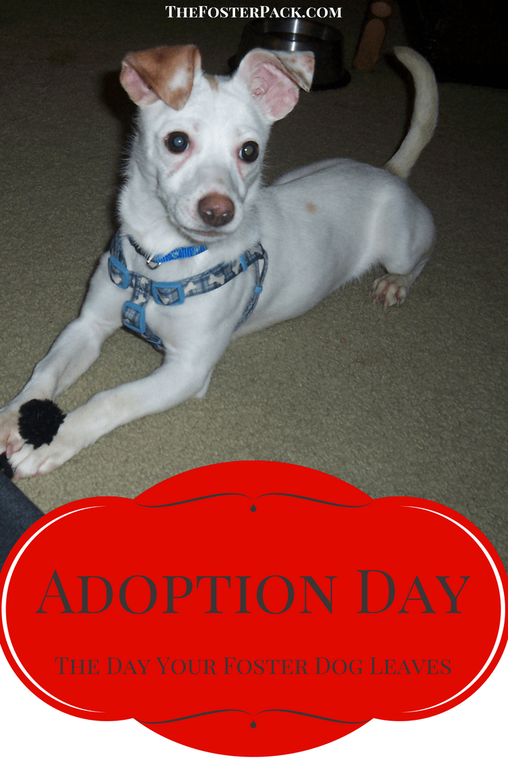 Adoption Day - The Day Your Foster Dog Leaves