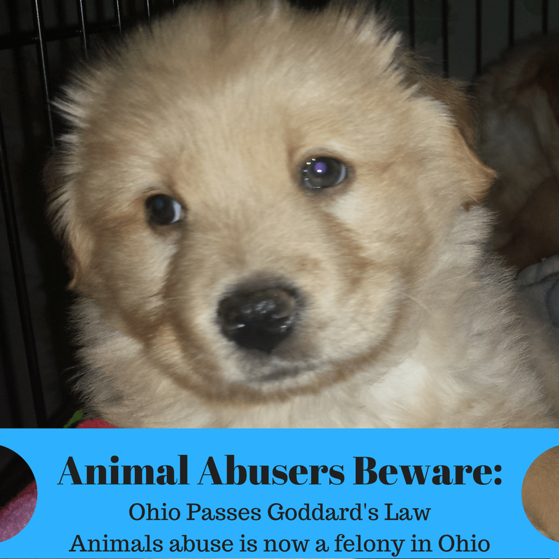 Animal Abusers Beware - Ohio Passes Goddard's Law