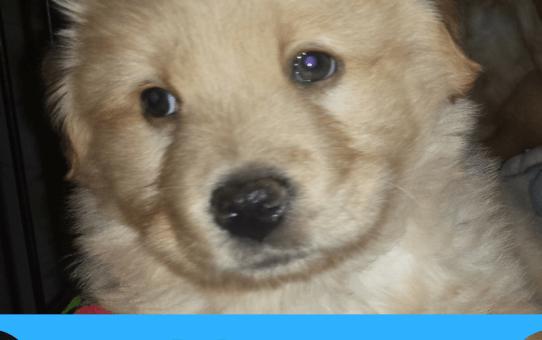 Animal Abusers Beware - Ohio Passes Goddard's Law