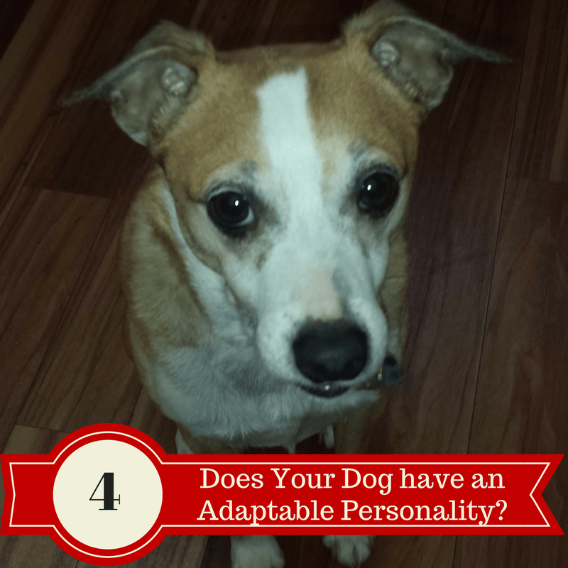 Personality Types- Adaptable Dogs