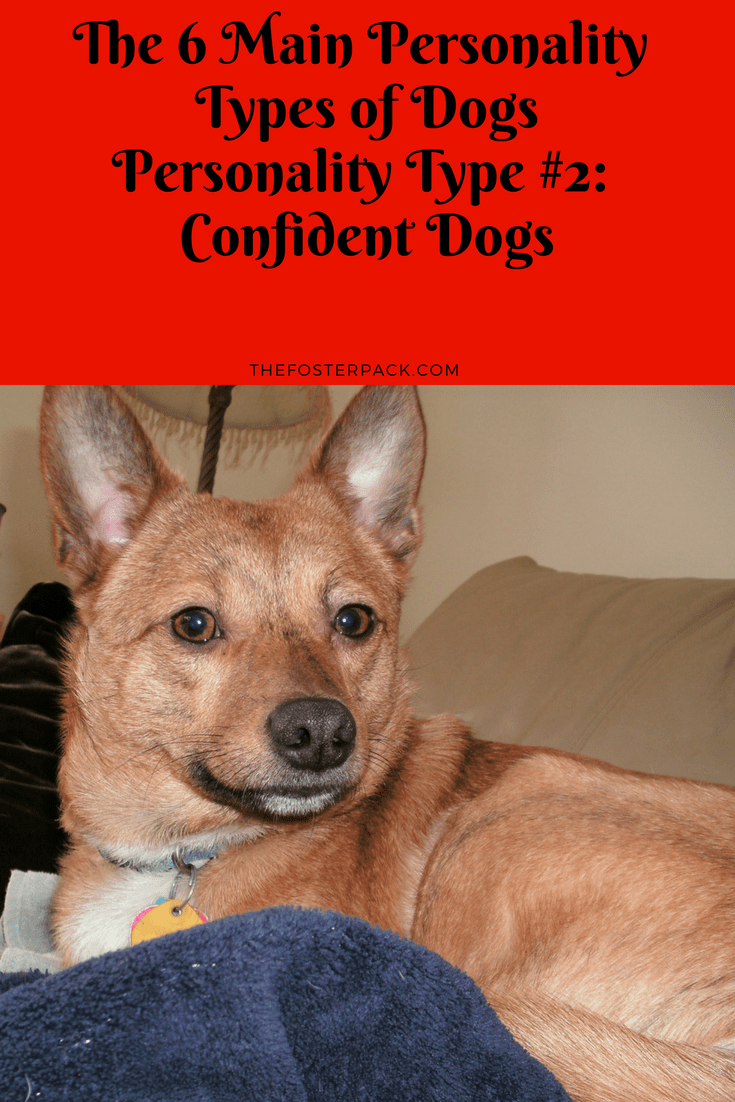 Personality Types: Confident Dogs