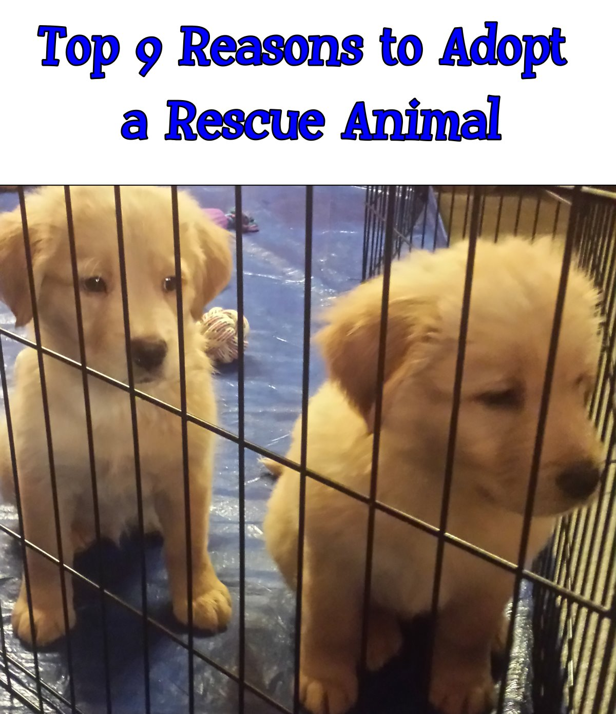 Adopting a Rescue Animal: The Top 9 Reasons to Adopt