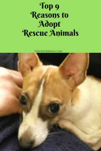 Top 9 Reasons to Adopt Rescue Animals