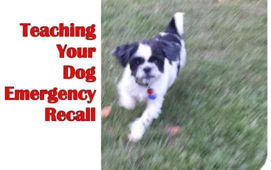 Teaching Your Dog Emergency Recall
