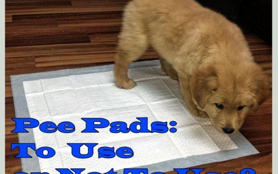 Pee Pads: To Use or Not to Use?