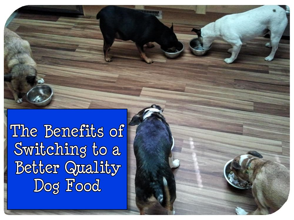 The Benefits of Switching to a Better Quality Dog Food