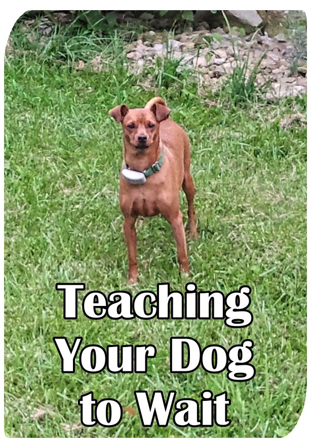 Teaching Your Dog to Wait