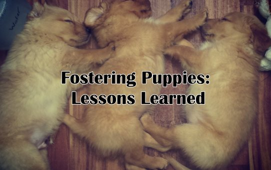 Fostering Puppies: Lessons Learned