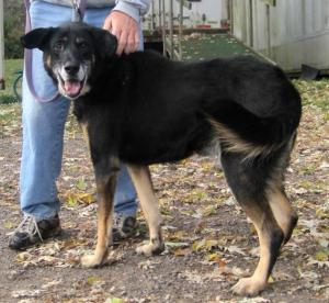Get Shep Adopted