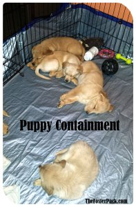 Fostering Puppies: Puppy Containment