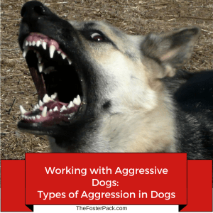 Working with Aggressive Dogs- Types of Aggression in Dogs
