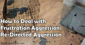 How to Deal with Frustration Aggression/ Re-Directed Aggression