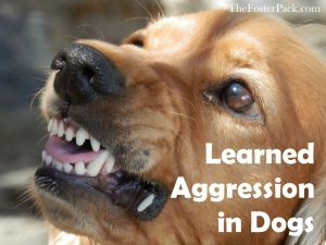 Learned Aggression in Dogs