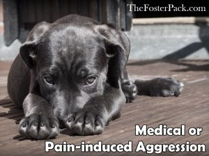 Medical or Pain-induced Aggression