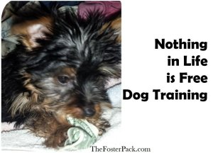 Nothing in Life is Free Dog Training