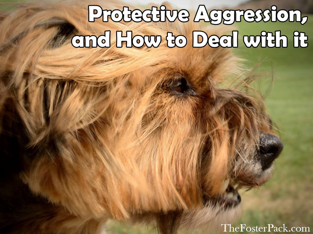 Protective Aggression, and How to Deal with it