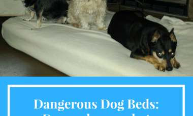 Dangerous Dog Beds: Do you know what your dog is sleeping on?