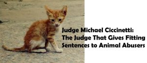 Judge Michael Ciccinetti: The Judge Gives Fitting Sentences to Animal Abusers
