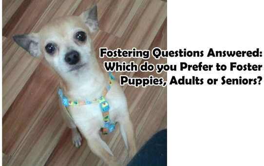 Fostering Questions Answered: Which do you Prefer to Foster, Puppies, Adults or Seniors?