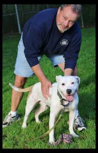 Zane, 2.5 year old Pitbull Terrier