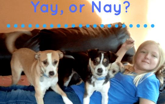 Adopting Littermates, yay or nay?