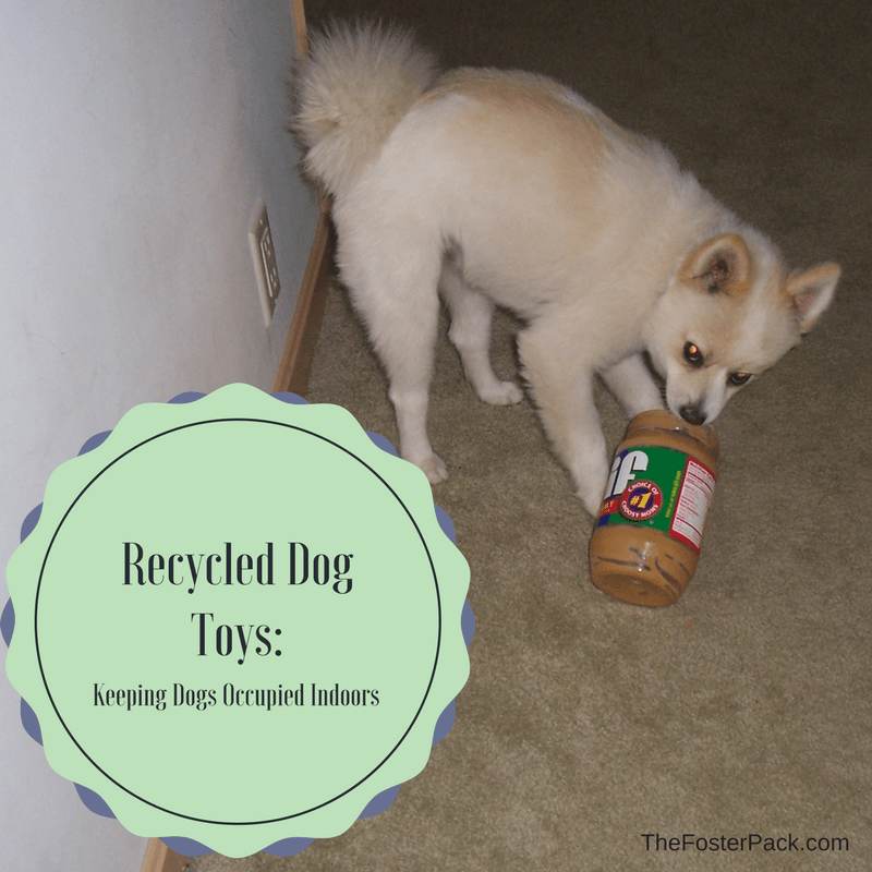 Recycled Dog Toys: Keeping Dogs Occupied Indoors