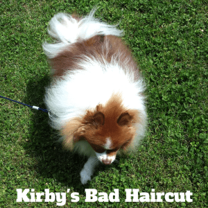 Grooming gone wrong: Kirby's bad haircut