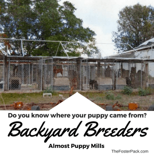 Backyard Breeders - Almost Puppy Mills