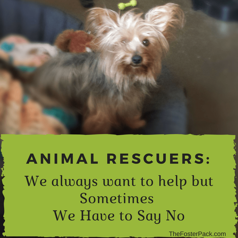 Animal Rescuers: Sometimes We Have to Say No