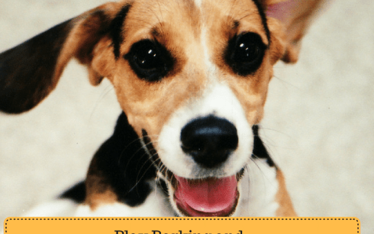 Play Barking and Excitement Barking in Dogs: How to Curb the Barking