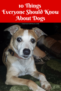 10 Things Everyone Should Know About Dogs