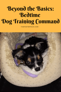Beyond the Basics: Bedtime Dog Training Command