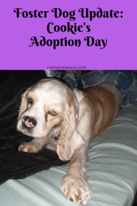 Cookie's Adoption Day