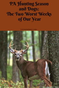 PA Hunting Season and Dogs: The Two Worst Weeks of Our Year