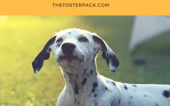 Beyond the Basics: How to Teach Your Dog to Speak