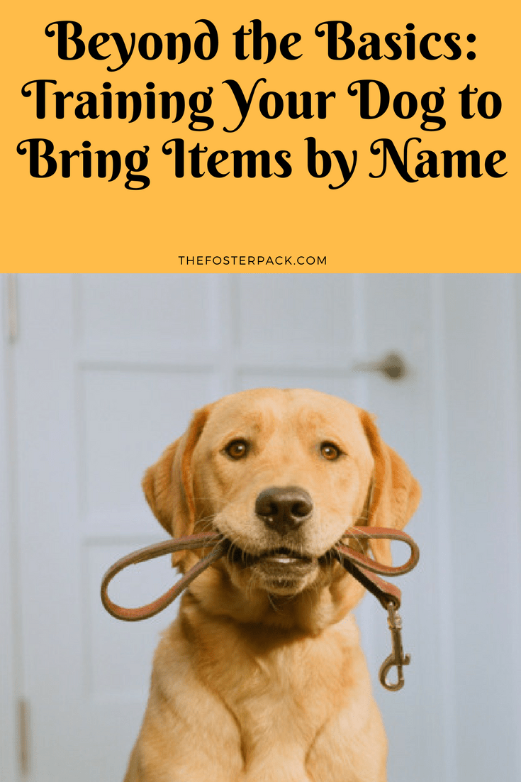 Beyond the Basics: Training Your Dog to Bring Items by Name