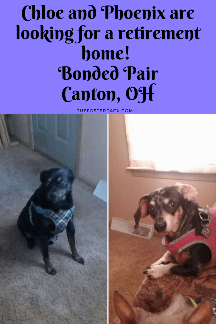 Chloe and Phoenix are looking for a retirement home! Bonded Pair