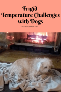 Frigid Temperature Challenges with Dogs