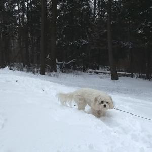 Snowy Sophie
