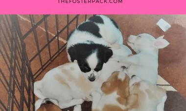 Foster Puppy Gallery: Razzie's Puppies