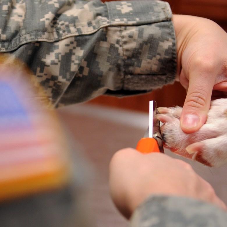 Dog Nail Clipping, Dog Grooming Basics