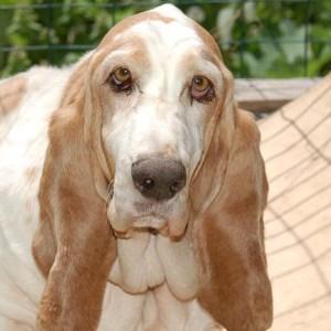 Dog Ear Cleaning, Dog Grooming BAsics