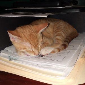 Callie, our devilish ginger kitten