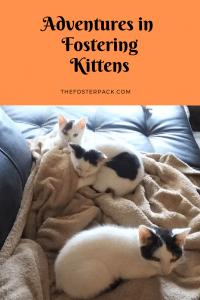 Adventures in Fostering Kittens