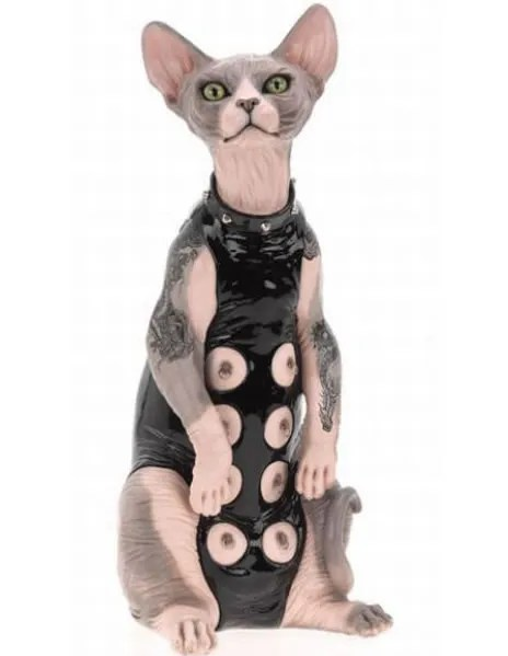 sphynx cat s&m