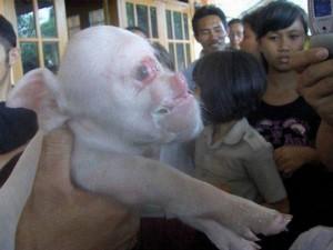 Weird Creatures - Freak Pig