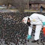 1000s of blackbirds drop from sky in Arkansas