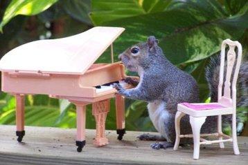 Squirrel plays piano