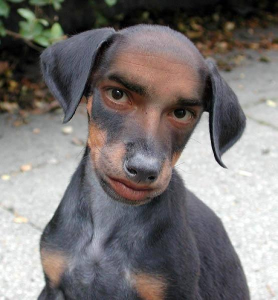 freaky bizarre photoshop photo dog human